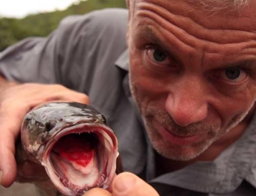 """Stiže osma sezona serije """"Čudovišta iz reke"""" na Discovery kanalu"""