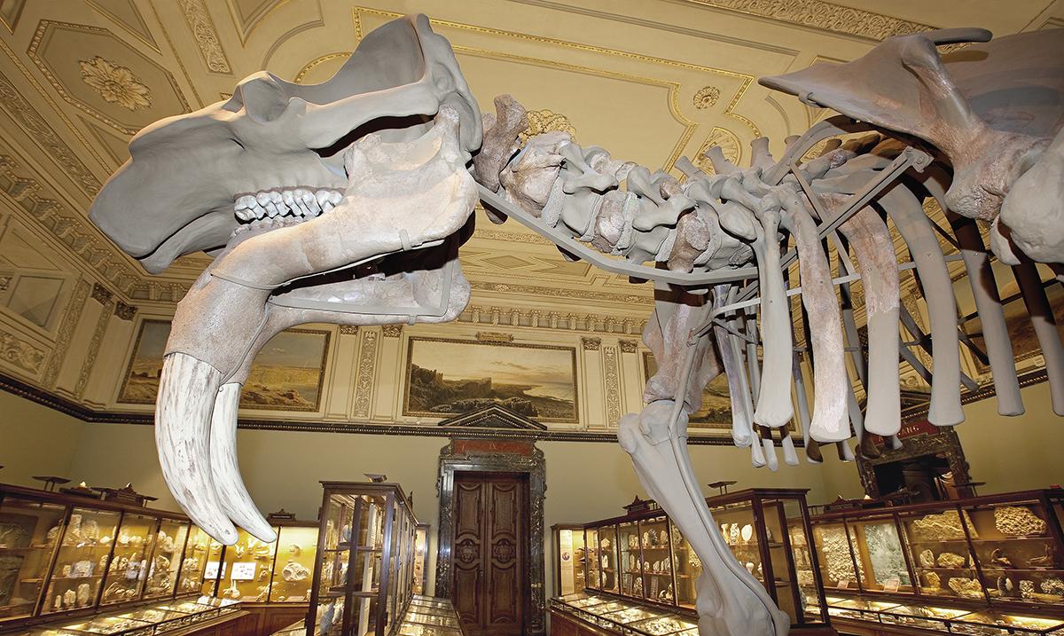 Digitalizacija bečkog Prirodnjačkog muzeja