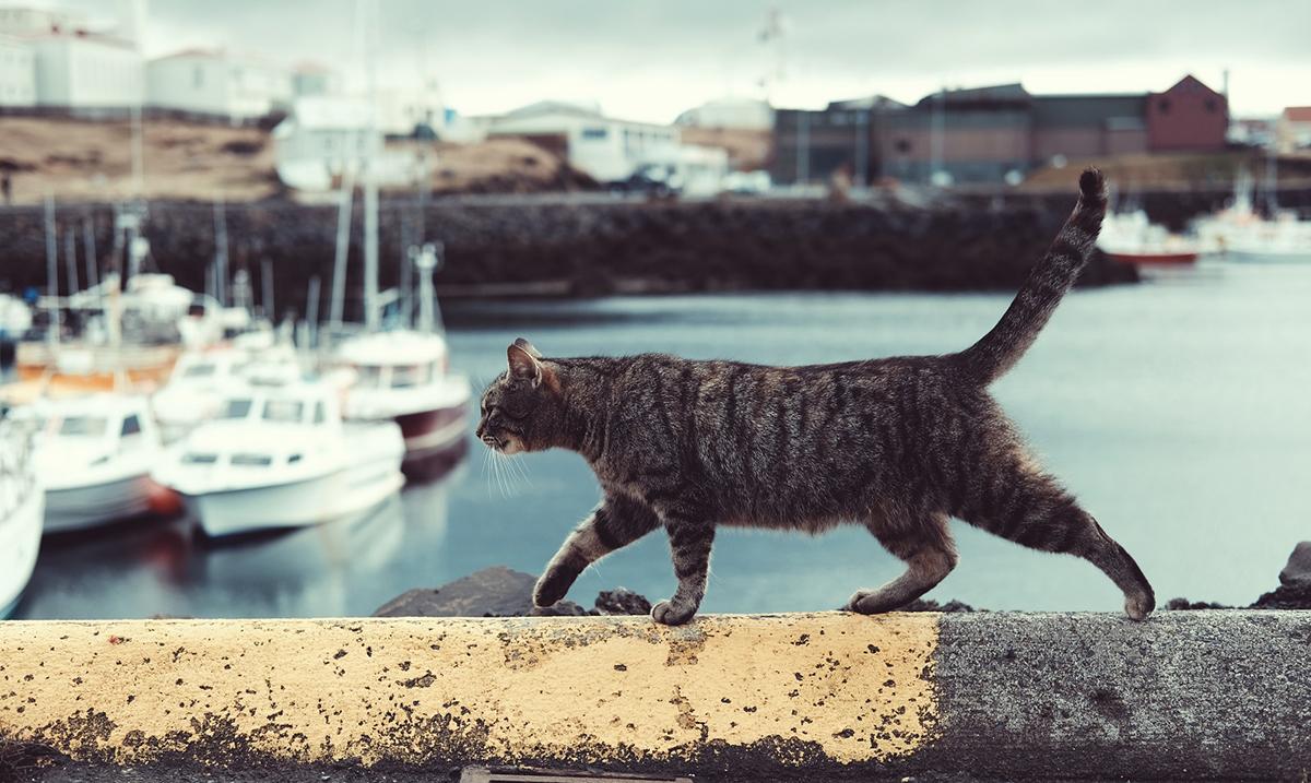 U Beču kastrirano 2500 uličnih mačaka